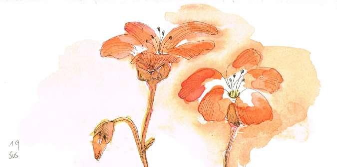 blume-orange.jpg
